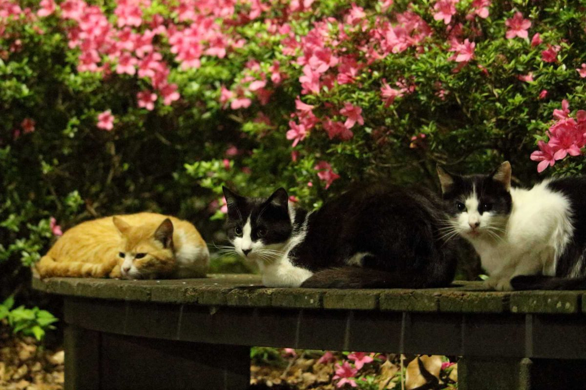 公園の入り口の猫達