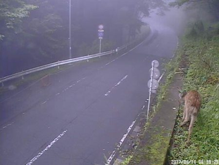 三峯神社付近の鹿
