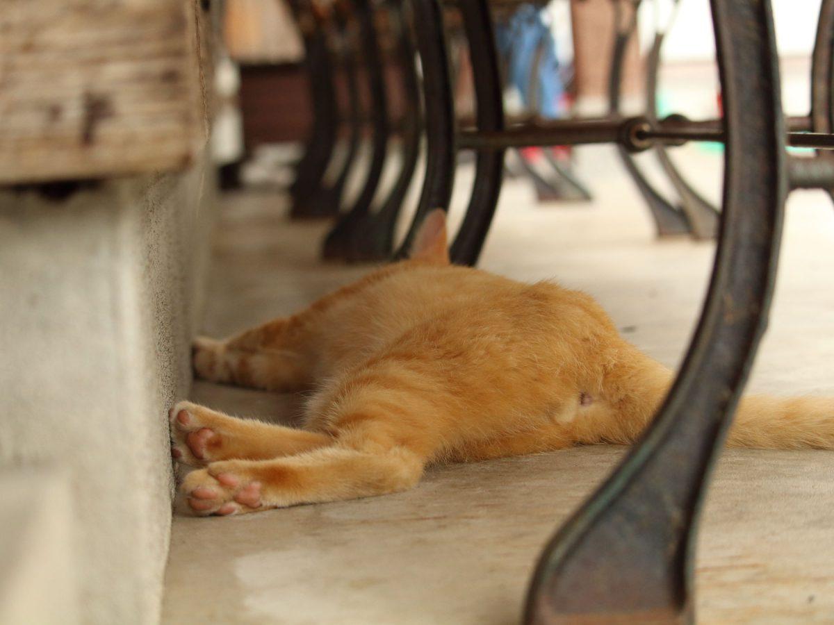 ベンチの下の尻を見せる猫