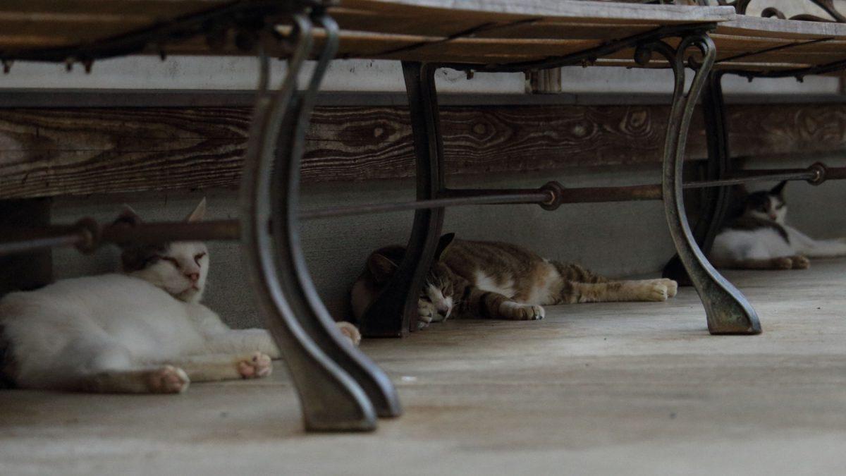 ベンチの下で均等に間隔を空けて寝そべる猫