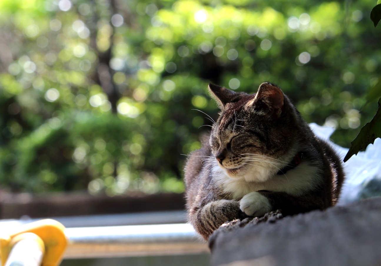 東池袋中央公園で寝そべる猫