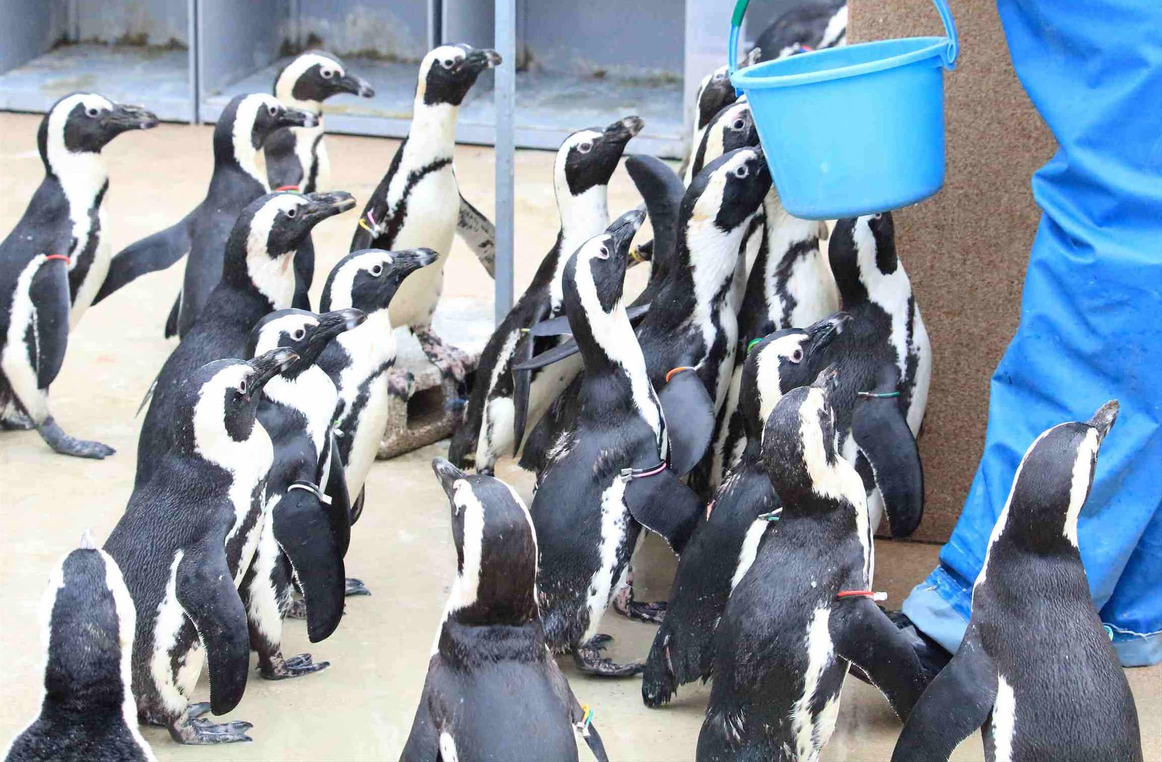 屋外コーナーのペンギンの群れ