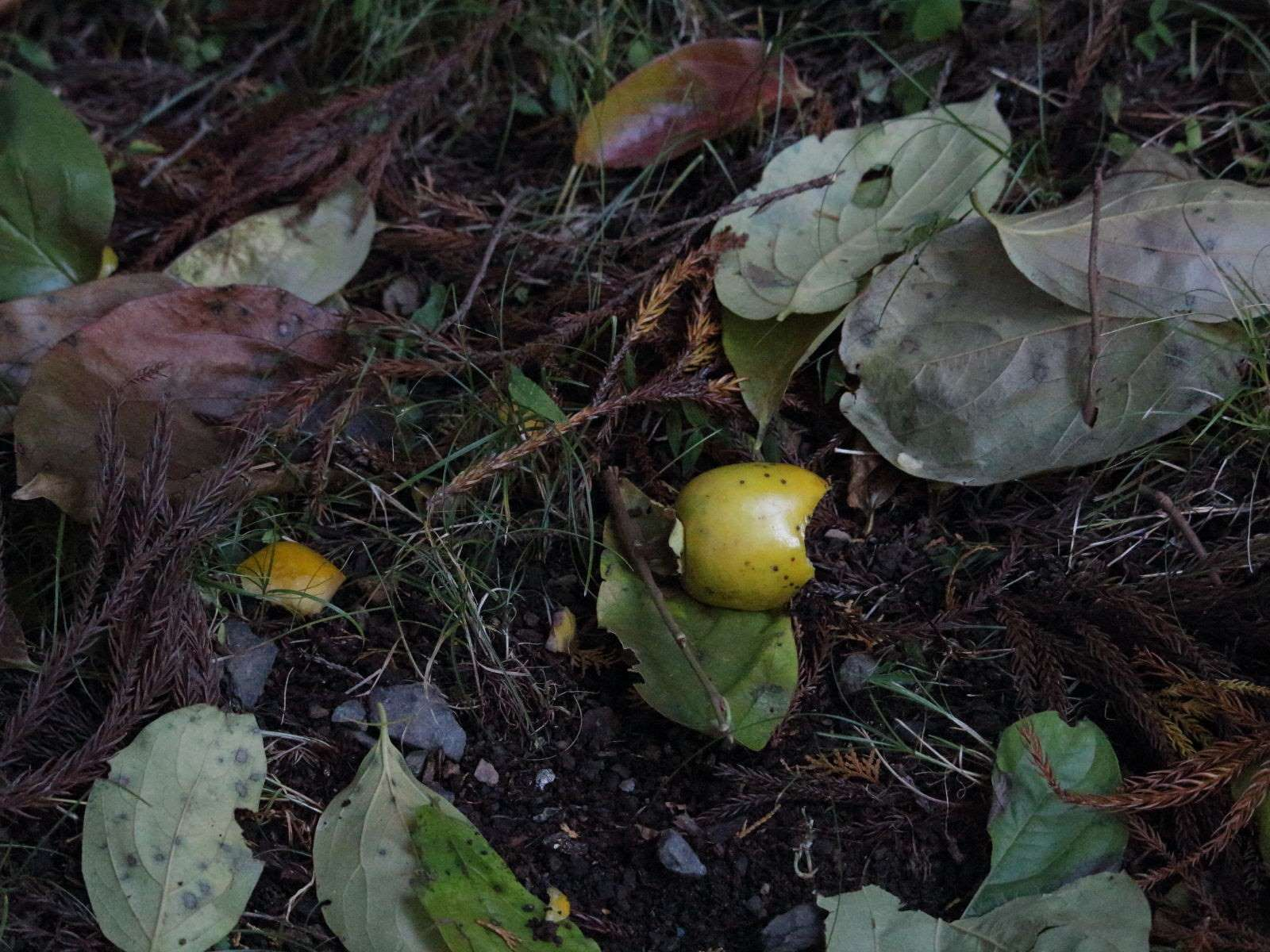 食べかけの木の実