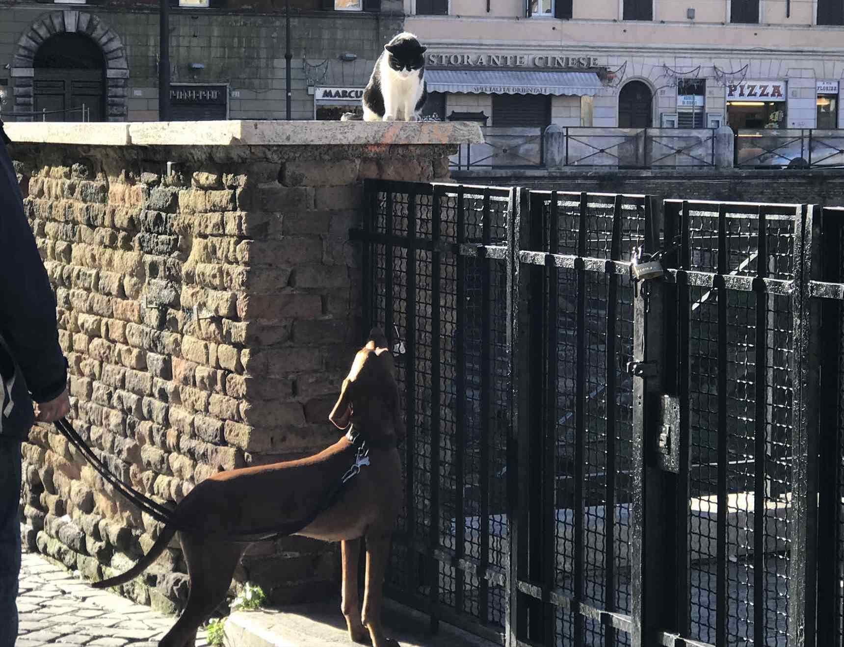 犬と猫の睨み合い