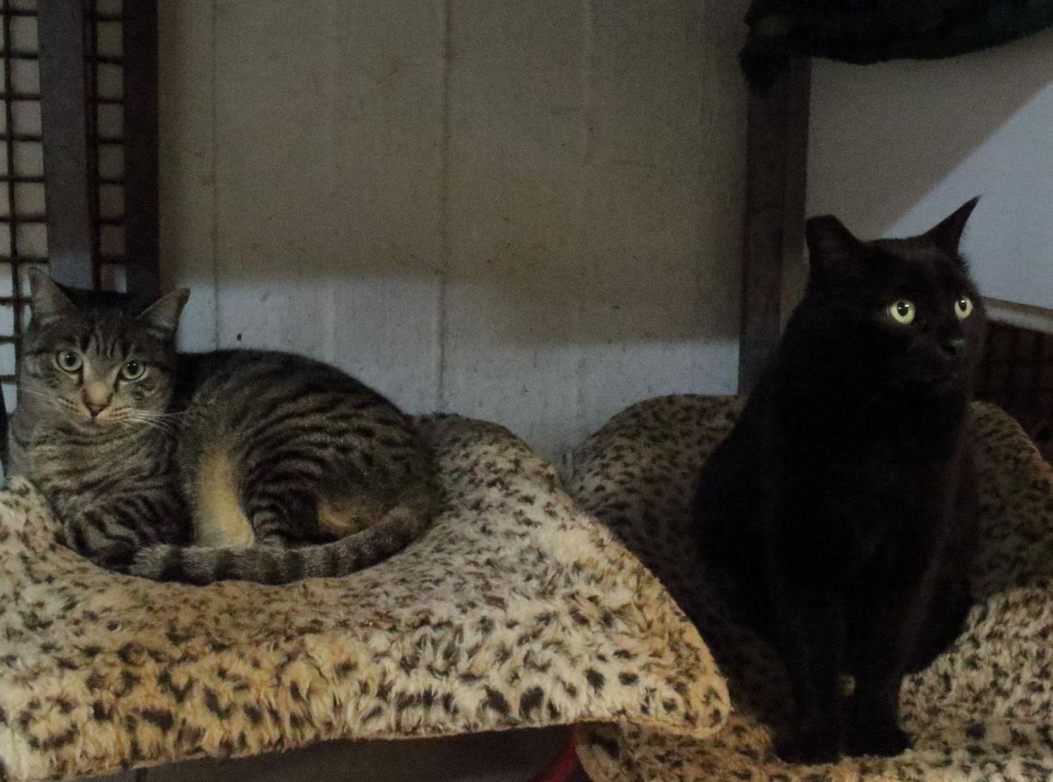 トラ猫と黒猫