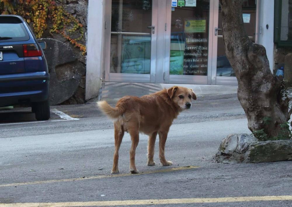 アマルフィの犬