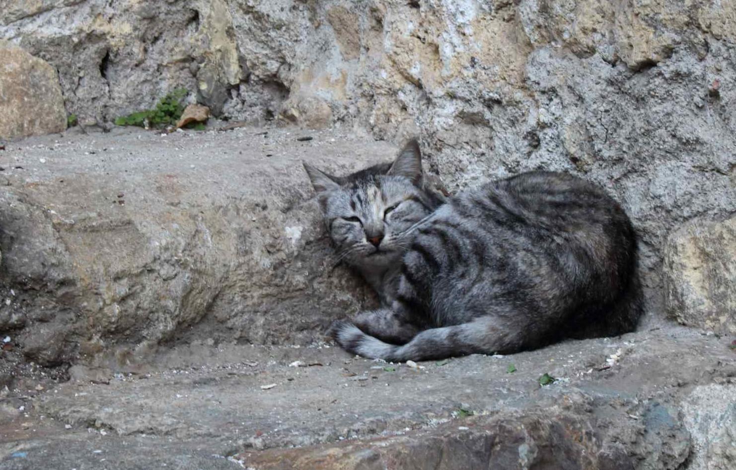 アマルフィの猫