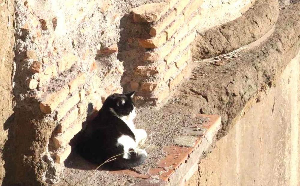 トッレアルジェンティーナ遺跡内の猫