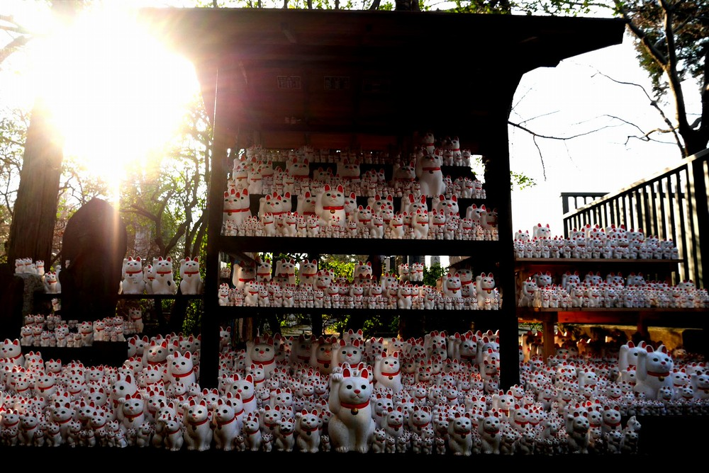 豪徳寺の大量の招き猫
