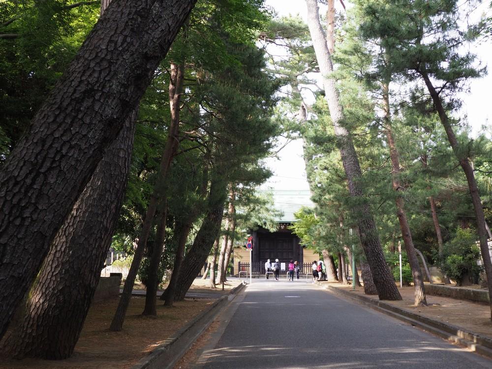 豪徳寺参道の松並木