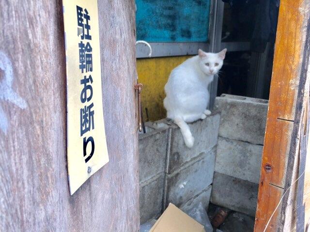 CamCam沖縄の猫
