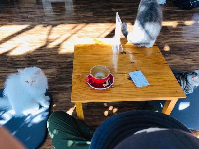 猫カフェの席