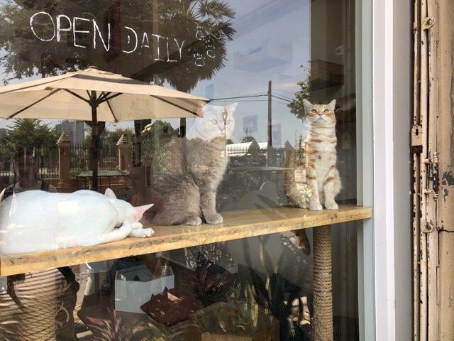 プノンペンの猫カフェ