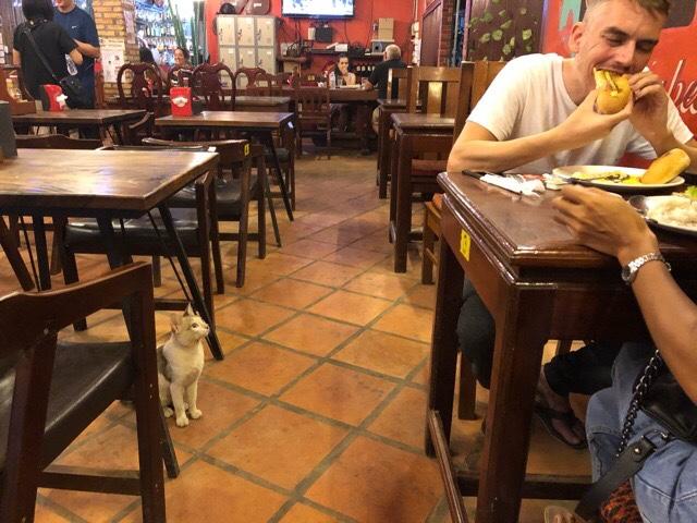 レストランに餌をもらいに来る猫