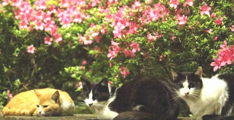 大井ふ頭中央海浜公園の猫