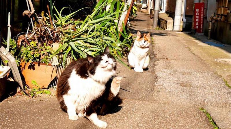 谷根千の猫
