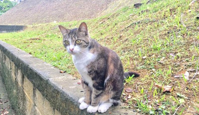 希望ヶ丘公園の猫