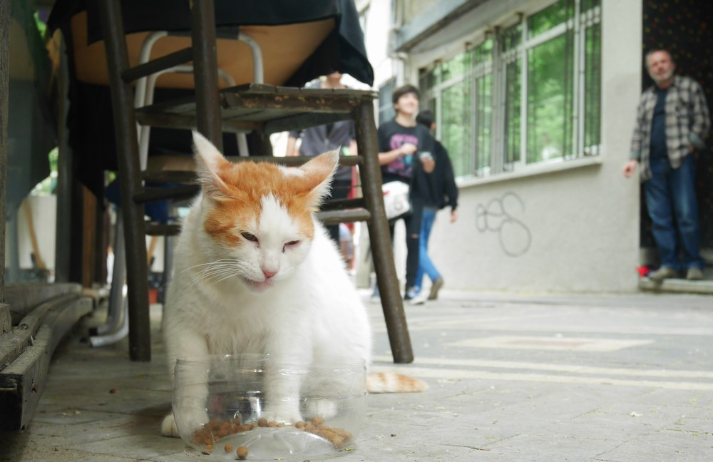 カドゥキョイのレストランの猫