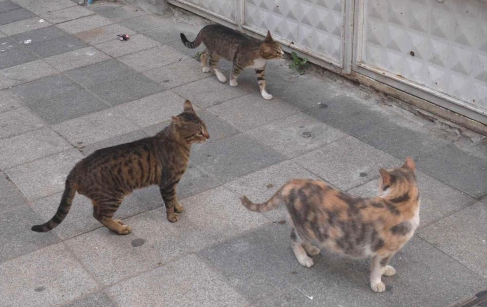 猫都市カドゥキョイ