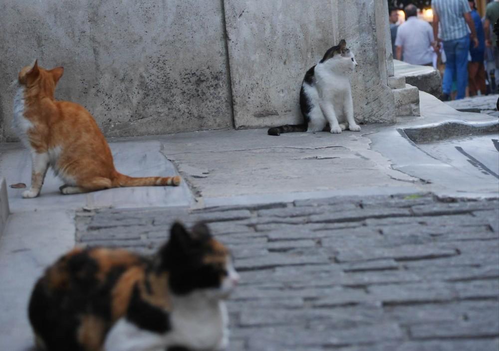イスティクラル通りの猫