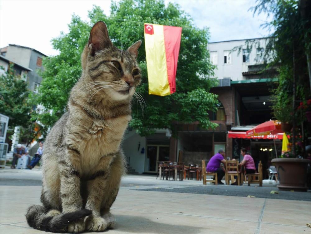 グランドバザール(カパルチャルシュ)にも猫