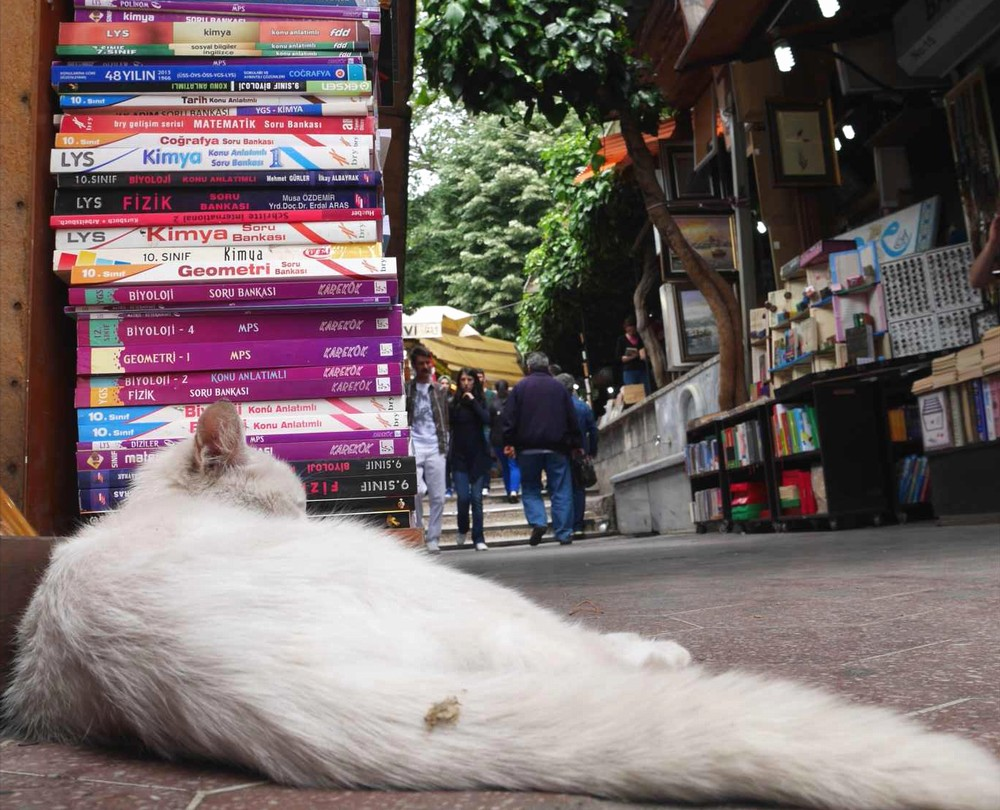 古本街(サハフラル・チェルシュス)の猫